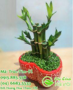 Cây phù hợp để trồng để bàn cải thiện vận khí
