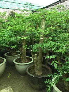 Gọi hotline để được hỗ trợ về kĩ thuật chăm sóc cây 396.699 hoặc 0981.525.055